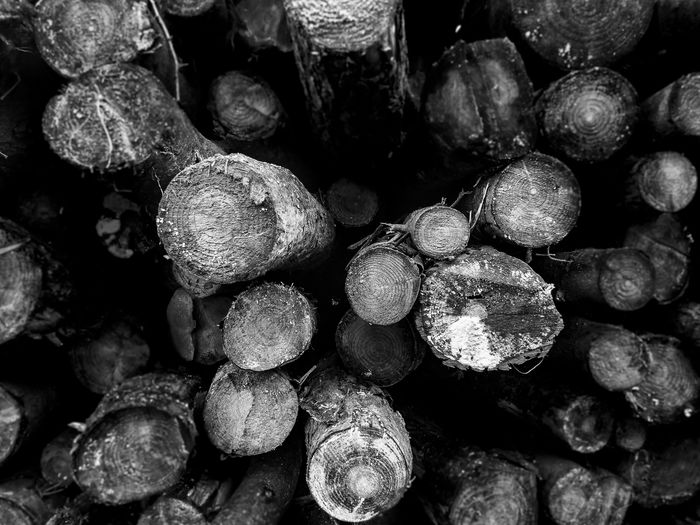 Black & White Backgrounds Beauty In Nature Close-up Day Full Frame Large Group Of Objects Logs Pile Monochrome Photography Nature No People Outdoors Pile Of Logs Stack Timber Wood - Material Black And White Friday