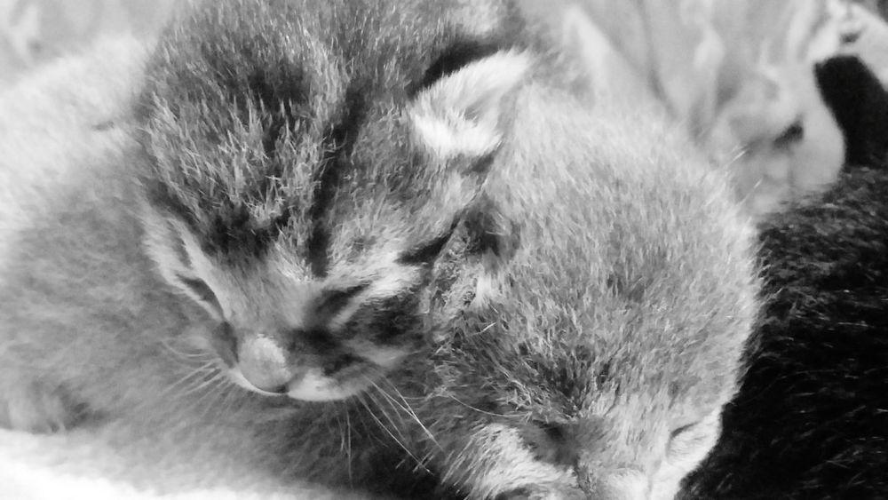 Kittens Precious Pets Kittens Of Eyeem Kitten Love Kittenlove