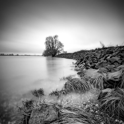 Relaxing Pictures Black & White Grass Meerbusch Reflection Rhein Rheinufer Shades Of Winter Tranquility Beauty In Nature Blackandwhite Day Grey Long Exposure Nature No People Outdoors Reflections River Rocks Roots Roots Of Tree Tranquil Scene Tree Water Winter