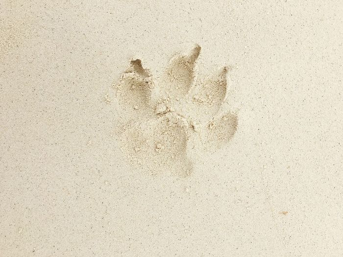 High Angle View Of Animal Footprint On Sand At Beach
