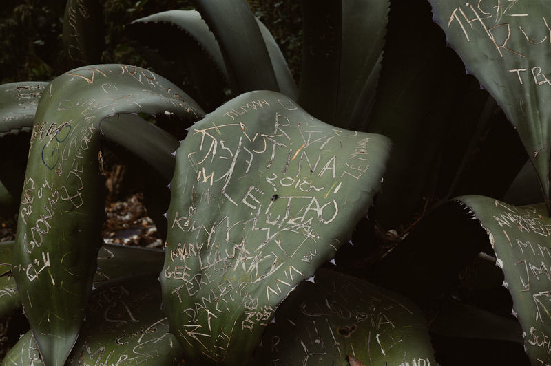 Writing on Nature Text Western Script Communication No People Close-up Love Emotion Leaf Plant Part Handwriting  Plant Nature Growth Green Color Message Outdoors EyeEm Nature Lover