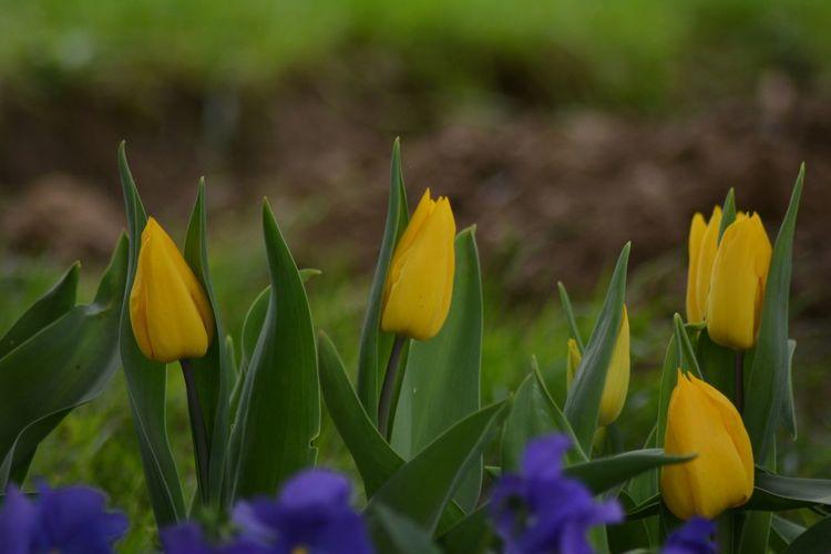 Nikon NikonD5200 Flowers Spring Macro Ilovephotography