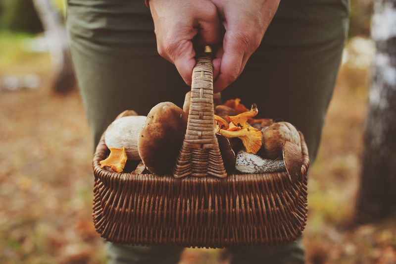 Midsection of person holding mushrooms in basket