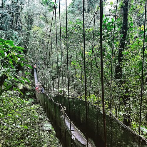 Hanging Bridges in Monteverde - Costa Rica Tree Nature Green Color Beauty In Nature Outdoors Adventure Nature Rainforest Hanging Bridge Life Trip Traveling Photography Adventures Mothernature Monteverde Cloud Forest EyeEmNewHere