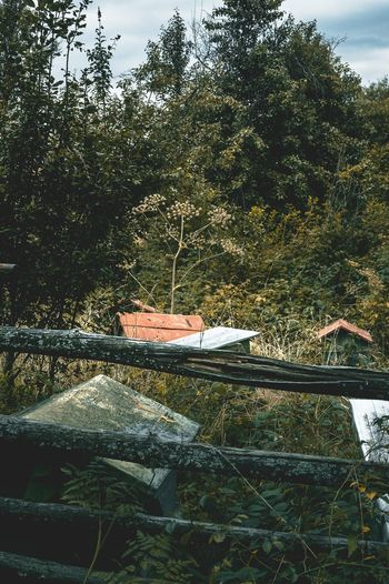 Abandoned boat by trees in forest