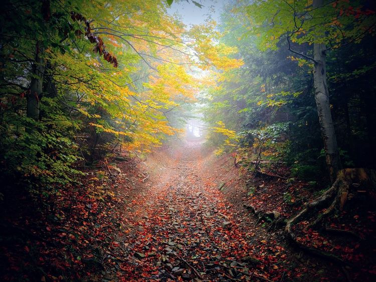 Jesień Autumn Beauty In Nature Beskid Beskid Zywiecki Nature Nature_collection Forest Las Poland Polska Drzewo Natura Drzewa Nature Photography Fog Trees Beskidy Sucha Góra