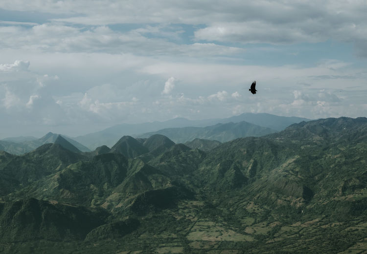 Bird flying over mountain range against sky