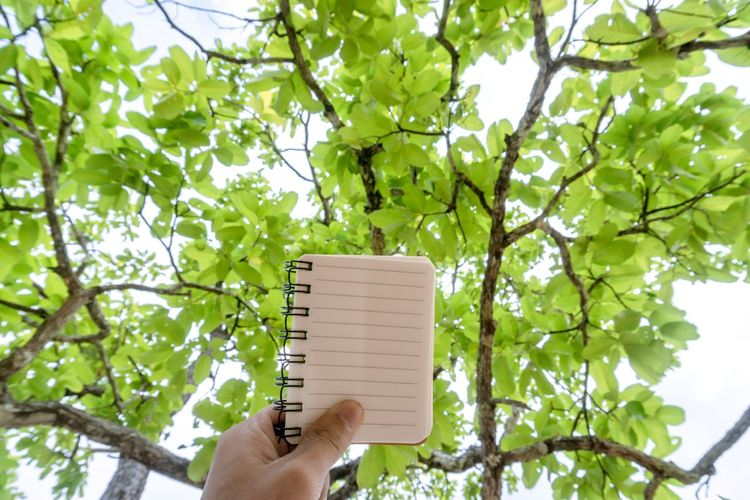 Background Blank Bright Business Close Up Concept Design Diary Human Hand Hand Tree Holding Plant Real People Body Part Day Finger Outdoors Nature Freshness Green Color Notebook Writing Paper Tree Lines Copy Space Low Angle View Growth Text Wite Pencil Felling