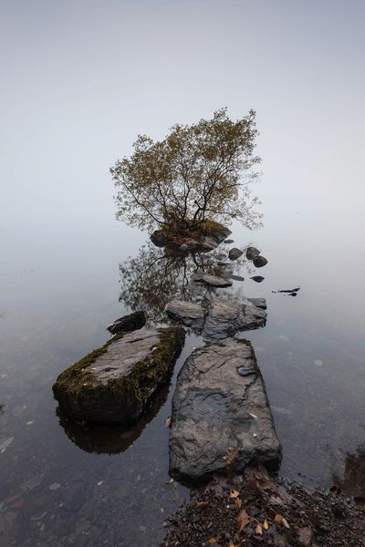 Stepping Stones Shades Of Winter Foggy Rocks And Water Stepping Stones Landscape_Collection Landscape Mist Fog TreePorn Tree Lone Tree Lake District Cumbria Lake View Windermere Shades Of Winter Water Nature Tranquil Scene Tranquility Lake No People Beauty In Nature Scenics Rock - Object #FREIHEITBERLIN