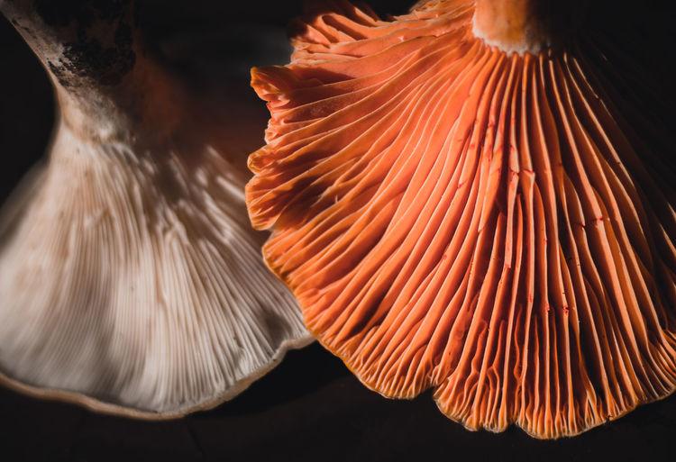 Close-up of orange leaf in sea