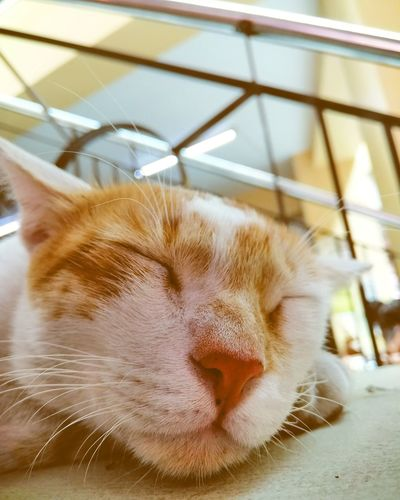 Pets Portrait Domestic Cat Dog Cute Feline Eyes Closed  Close-up