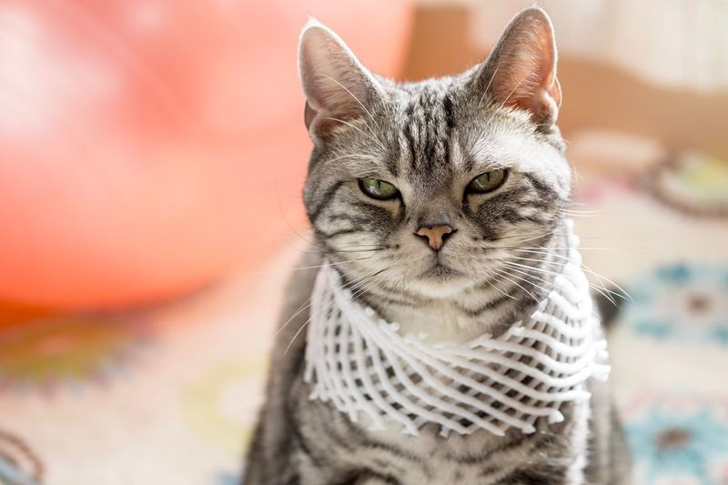 EyeEm Selects Domestic Cat Feline Pets Domestic Animals Animal Themes Portrait