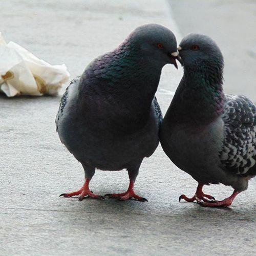 Lovebirds Literallylovebirds Loveisintheair Loveinrome Birds Vatican Italy Photograph Photographylovers Feelloved