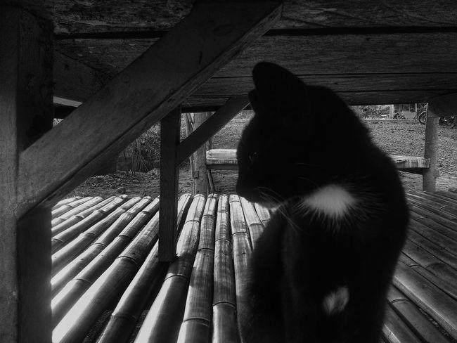 Kuro Neko Bwphotoshoot Bwphotography Bwphoto Eyeemphotography Photographyblackandwhite Photographyblackwhite First Eyeem Photo Black And White Black & White Blackandwhite Photography Blackandwhite Black&white Black And White Photography Blackandwhitephotography