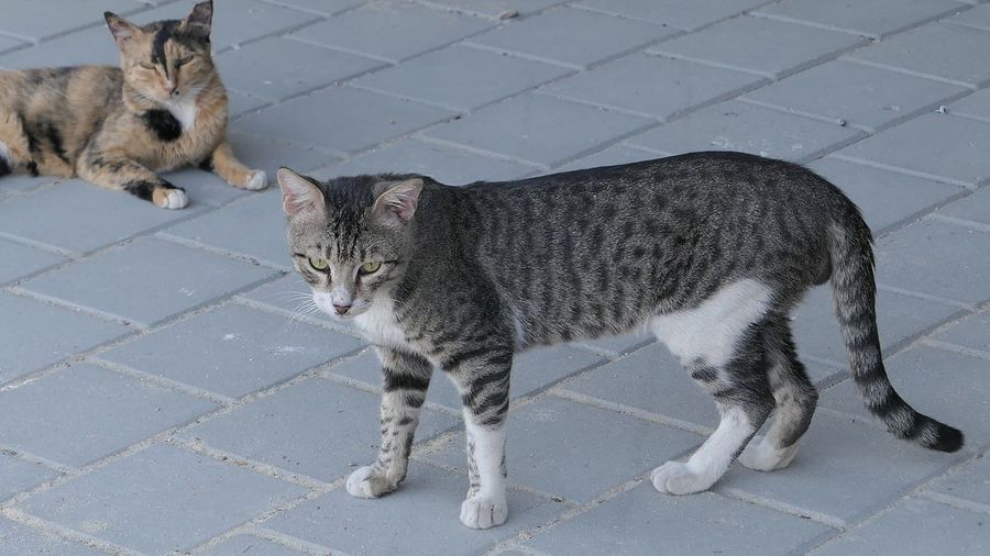 Street Photography City Two Animals Mammal Animal Themes Animal Pets Feline Vertebrate Cat Domestic Animals No People Day Domestic Cat Footpath Street Standing Outdoors