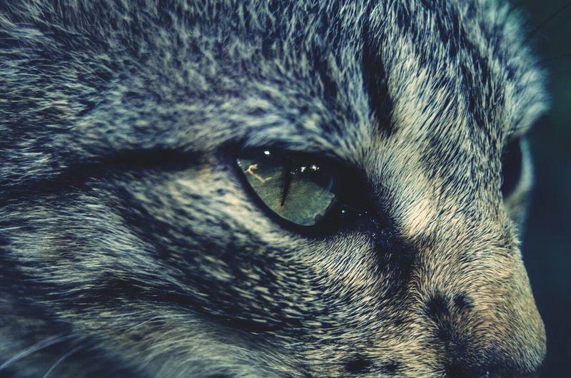 Cat Green Eyes Beautiful Animal