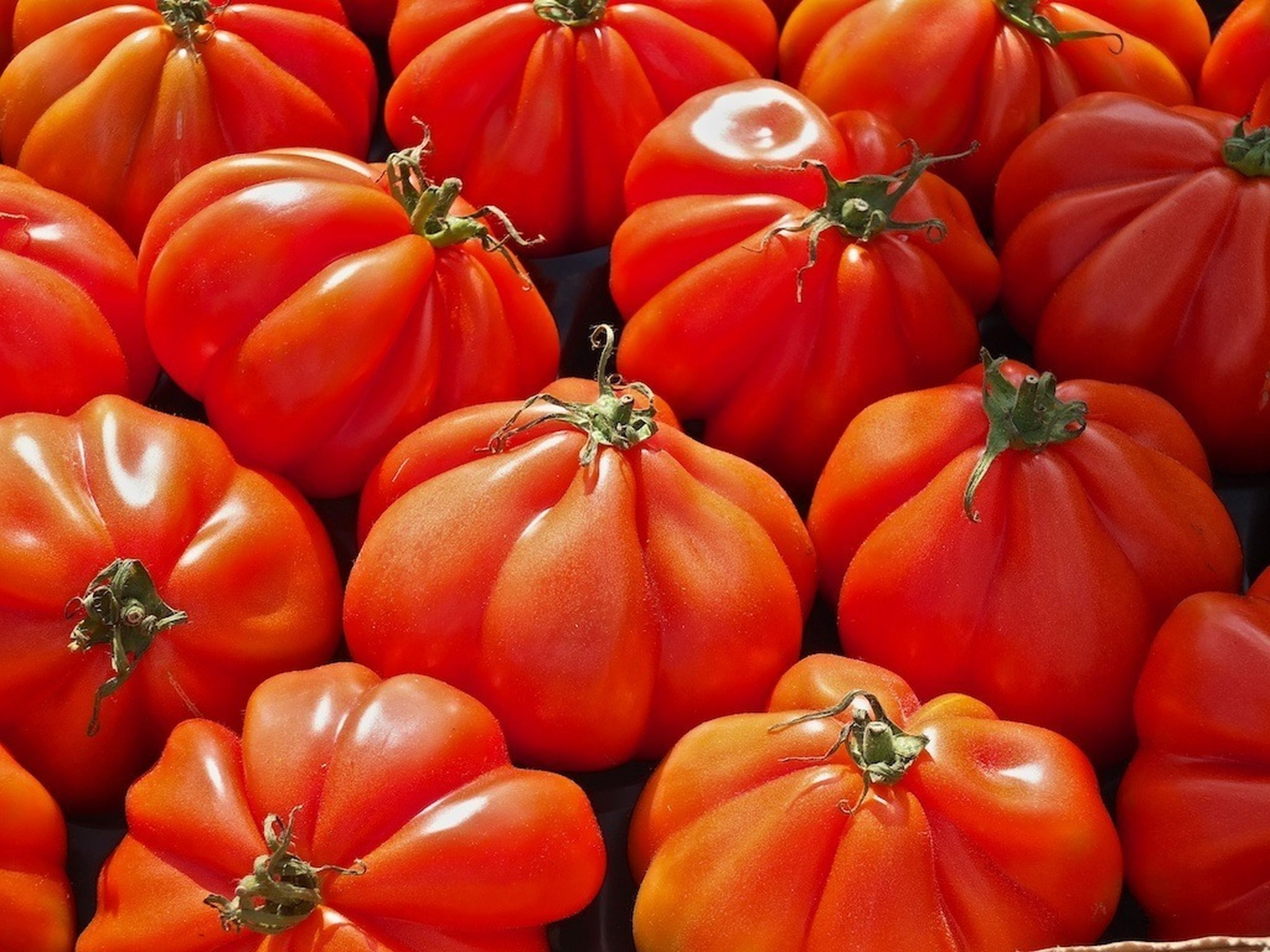 red, full frame, freshness, food and drink, backgrounds, vegetable, healthy eating, abundance, orange color, food, large group of objects, for sale, tomato, market, pumpkin, market stall, retail, still life, no people, close-up