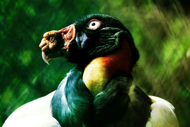 Wildlife Angelogalgo Bird Photography Portrait