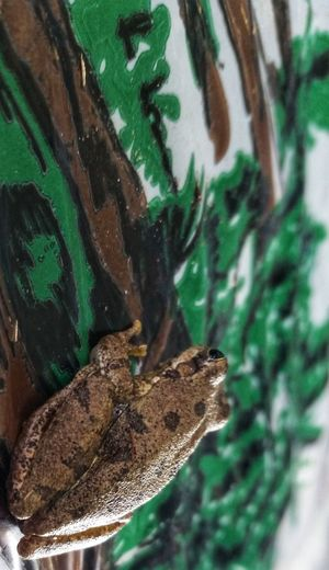 Awareness. Frog