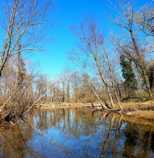 Point of Entry Nature No People Clear Sky Day Outdoors Tree creek