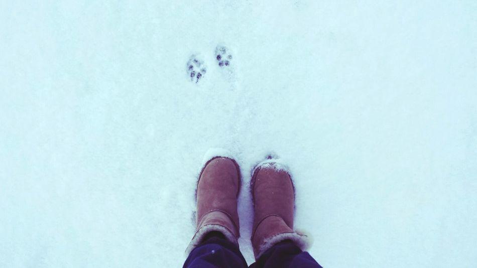 Snowwoman Snow ❄ Snowday Snowshoes Snowwhite Snowdog ❄❄❄⛄❄❄???