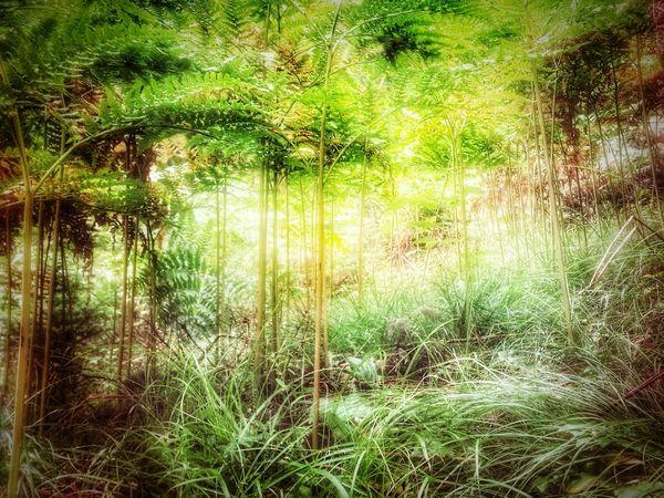 undergrowth EyeEm Gallery EyeEm Best Shots EyeEm Best Edits Undergrowth Underwood Underbrush Plants Plants 🌱 Thick Dense Forest Floor Forest Fern Vegetation Impenetrable Fairy Forest No Edit No Fun