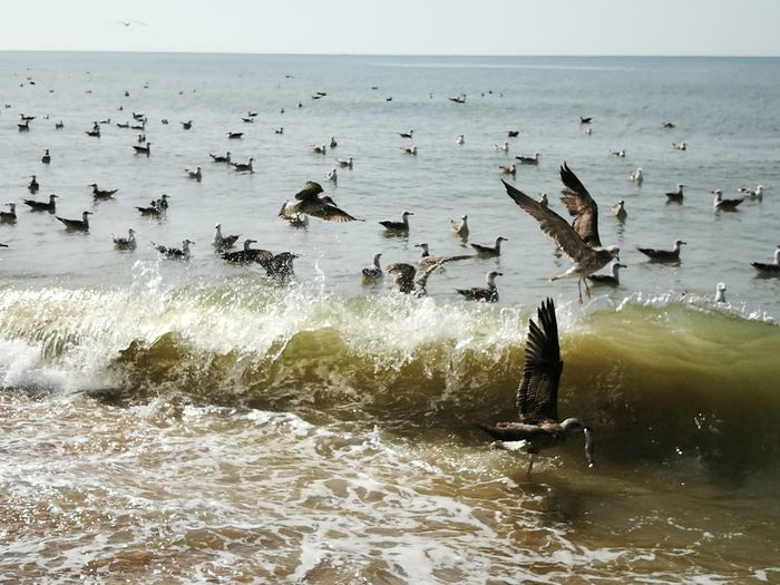 Flock of seagulls at sea