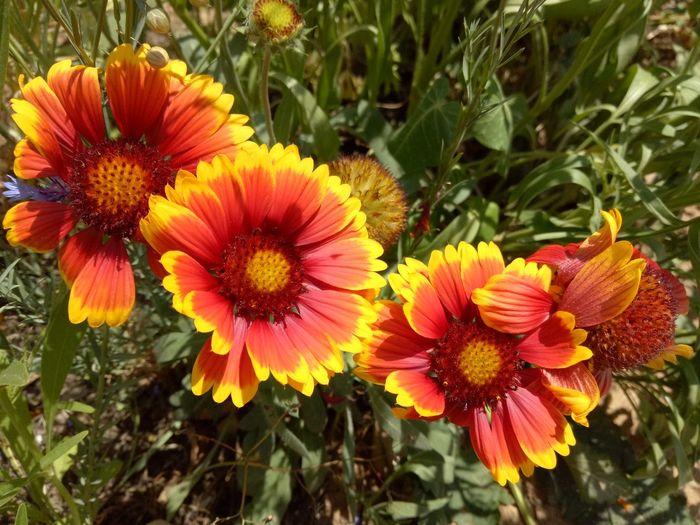 Flower Nature Petal