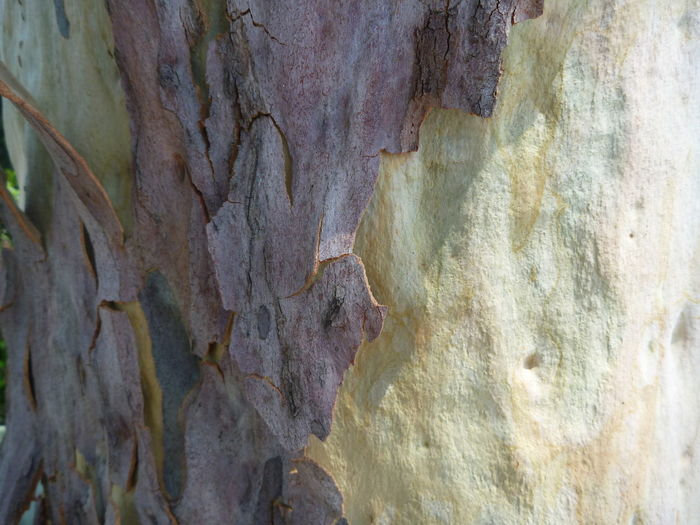 Close Up Full Frame No People Outdoors Painterly Pastel Colors, Tree Bark Patterns Tree Bark Texture