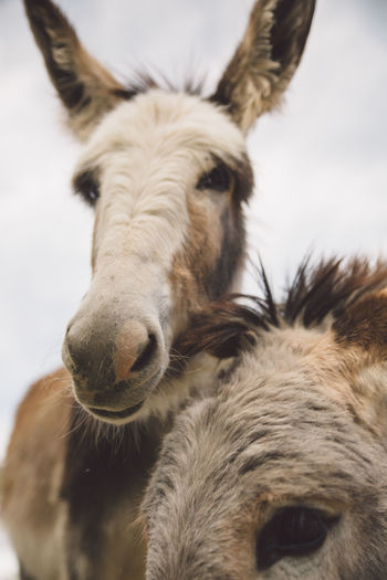 Low Angle View Of Donkeys Against Sky