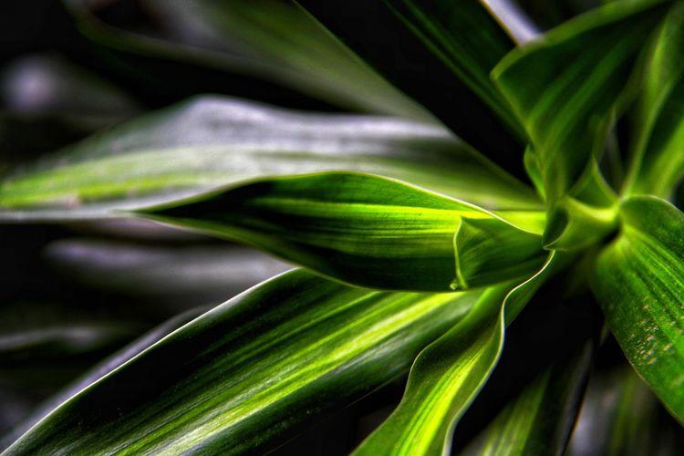 Sharp Plant