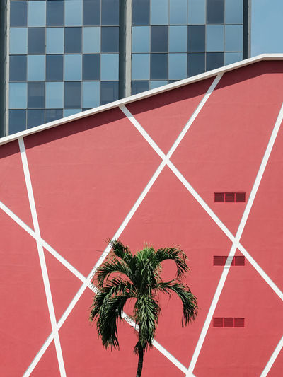 Palm tree against red building