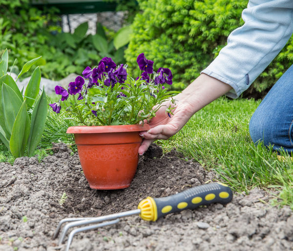 Midsection of person holding flower pot on plants