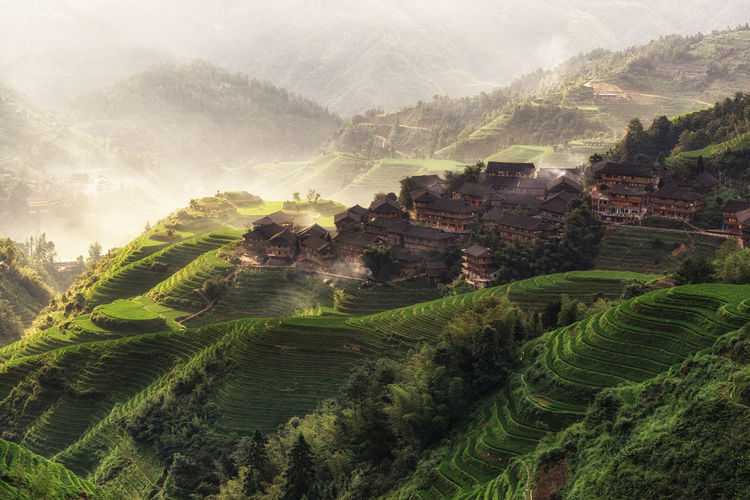 beautiful morning view over tian tou zhai village in longji rice terrace in guangxi province of China. Mountains filled with rice fields covered in shroud of morning fog. Asian  Beauty In Nature China Chinese Field Foggy Morning Green Color Guangxi High Angle View The Traveler - 2015 EyeEm Awards Longji Rice Terrace Longsheng Lush Foliage Morning Mountain Nature Remote Rice Field Rice Terrace Rural Scenics Sunrise Tranquil Scene Village Landscapes With WhiteWall