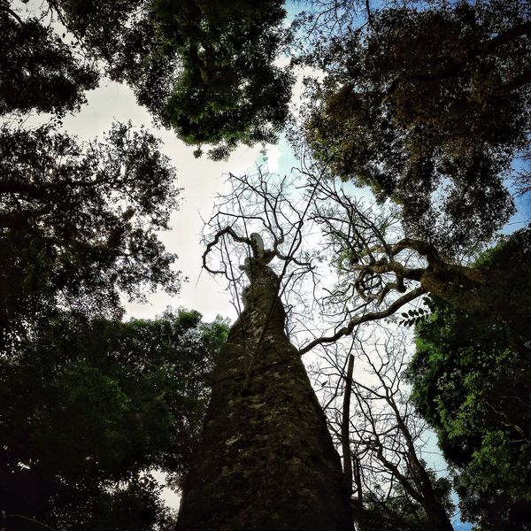 Tree without leaves Look Up And Thrive Eye Em Nature Lover EyeEm Best Shots AMPt - Escape