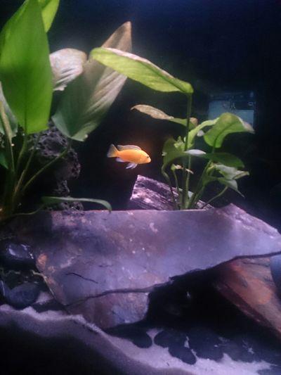 aquarium Aquarium Labido