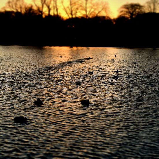 Ducks @ Sunset EyeEmNewHere Scenic Walking Is Healthy North London Walking Peaceful Red Sky Sunset Reflection On Water Water At Sunset TreesAndWater Nature Photography Nature Park London Parks Pondlife Pond Ducks In Water Ducks Hampstead Heath Ponds Hampstead Heath Water Silhouette Sunset Nature Beauty In Nature Reflection Tranquil Scene Tree Outdoors EyeEmNewHere