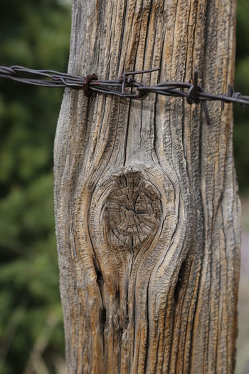 Barbed Wire No Trespassing Post Wood Fence Fencepost Focus On Foreground Gria Knothole Knotted Wood Nature Tree Wood - Material Woodgrain
