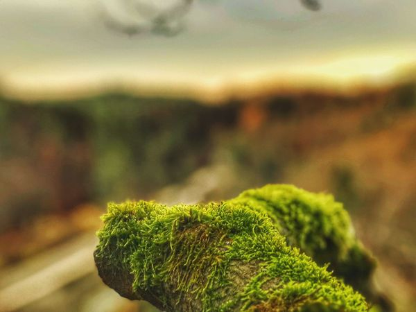 Focus On Foreground Nature Green Color Growth Close-up No People Plant Outdoors Day Beauty In Nature Fern Freshness Sky Tree Photography Autumn Atmospheric Mood Blurry Outside Germany EyeEm Selects EyeEm Nature Lover Tranquility