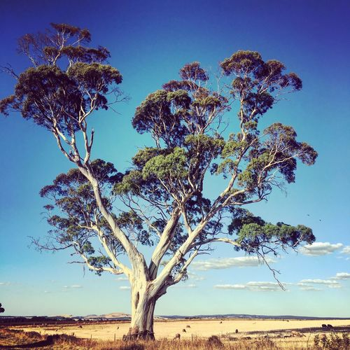 Tree Trees CountryDaylesford Rural Summer ☀ Summer Views