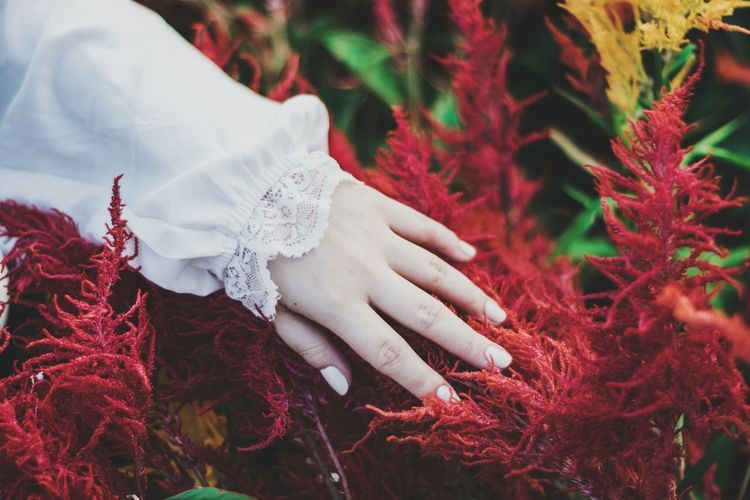 Hand on red flowers