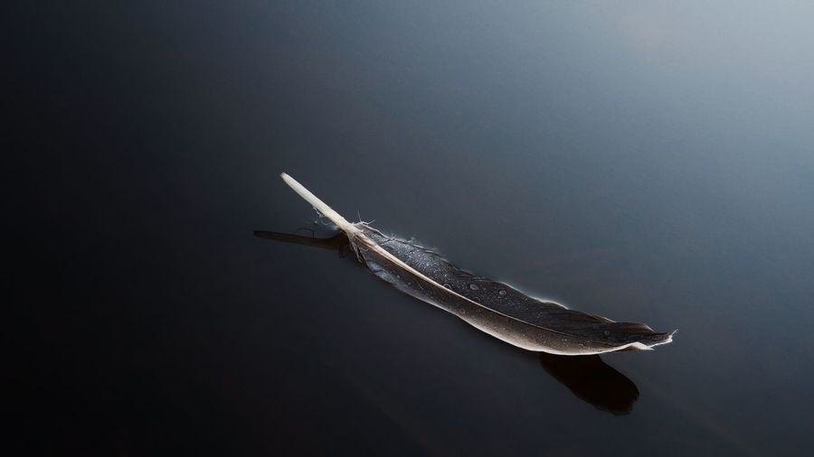 High angle view of feather on wet field