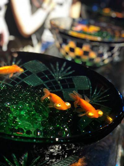 金魚鉢 金魚 アクアリウム 夏 納涼 和風