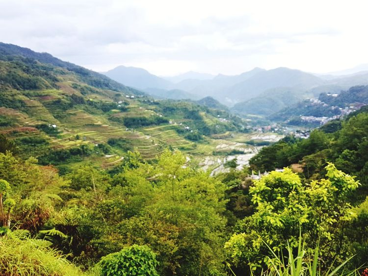 When we arrived everything was green 😍 in the Afternoon it Rice Field for filled with Water ans it looks Beautiful 😍 i hot Lucky to see both 😎 Nature Philippines Water Banaue Rice Terraces Green Rice Field Manmade Tea Crop Tree Mountain Terraced Field Tree Area Rural Scene Beauty Forest Agriculture Social Issues Rice Paddy Calm The Traveler - 2018 EyeEm Awards