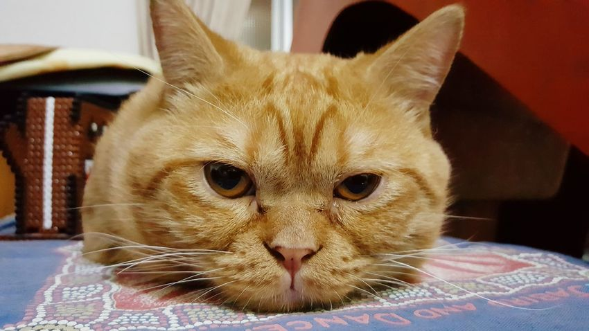 翻轉視界 喵星人 Wish Catboy Focus 猫