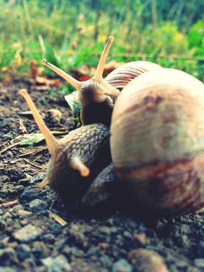 Peekaboo! Snail Nature Macro