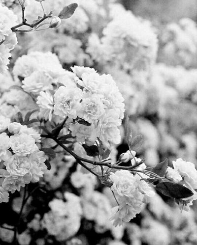 Death did us part , but you better be holding those golden gates for me when i arrive ? Rip Sadness I Love You ! Broken Paradise Flowers Blackandwhite Oneyear We're Too Young To Be This Sad. I Miss You