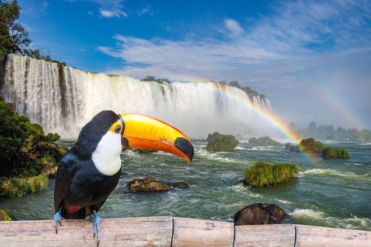 Bird perching against waterfall
