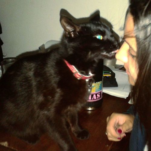 Sos mi unico amor. Instapic BLackCat GatoNegro Trece thirteen thongue 13 kiss cat cats pet pets mascota negro love sweet owner