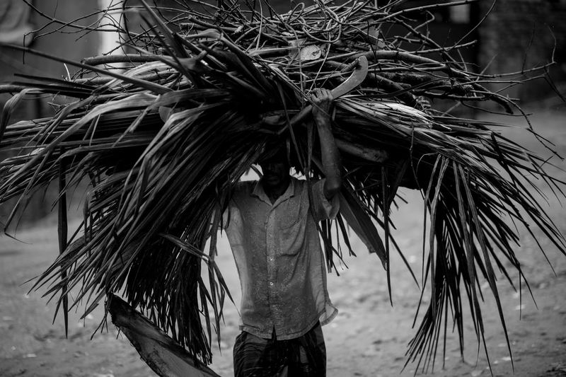 Man Carrying Branches On Head